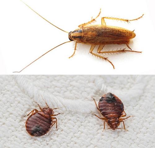 Клопы и тараканы