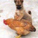 Постельные клопы и домашние животные