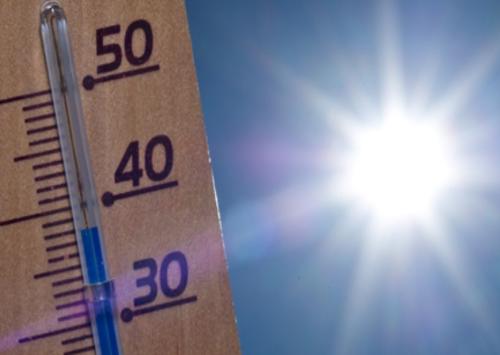 Высокая температура смертельна для клопов