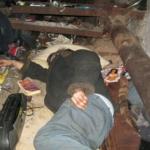 Обитают ли постельные клопы в подвале?