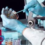 Клопы переносчики инфекций: правда или вымысел?